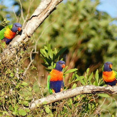bird-watching-tropical-treks
